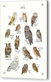 Owls Acrylic Print by Amy Hamilton