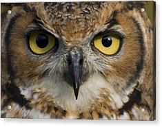 Owls Eyes Acrylic Print by Pixie Copley