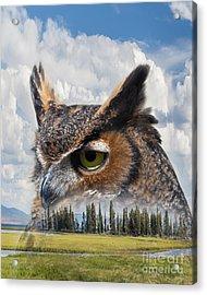 Owl's Rest Acrylic Print