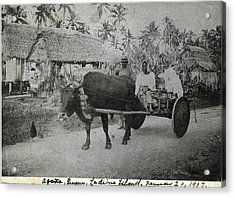 Acrylic Print featuring the photograph Ox Cart Guam 1907 by eGuam Photo