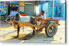 Ox Cart Acrylic Print