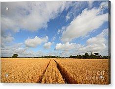 Oxfordshire Acrylic Print by Nichola Denny