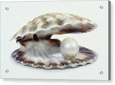 Oyster With Pearl Acrylic Print