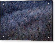 Ozark Trees #3 Acrylic Print