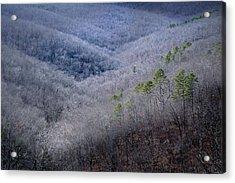 Ozarks Trees #4 Acrylic Print