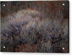 Ozarks Trees #5 Acrylic Print