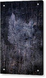 Ozarks Trees #6 Acrylic Print