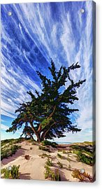 Pacific Beach Juniper Acrylic Print