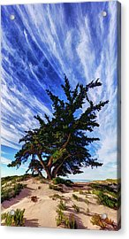 Pacific Beach Juniper Acrylic Print by ABeautifulSky Photography