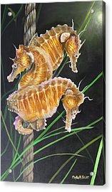 Pacific Lined Seahorse Trio Acrylic Print
