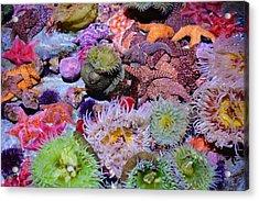 Pacific Ocean Reef Acrylic Print by Kyle Hanson