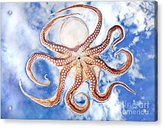 Pacific Octopus Acrylic Print by Mike Raabe