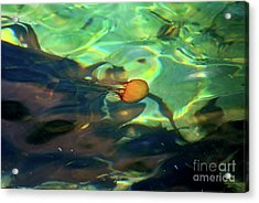 Acrylic Print featuring the photograph Pacific Sea Nettle Jellyfish by Susan Wiedmann
