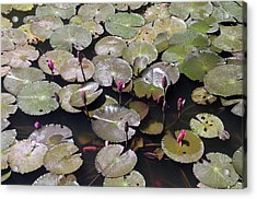 Pad In Town Acrylic Print by Jez C Self