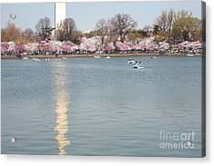 Paddleboating At Cherry Blossom Time In Washington Dc Acrylic Print