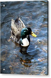 Acrylic Print featuring the photograph Paddling Peacefully by RC DeWinter