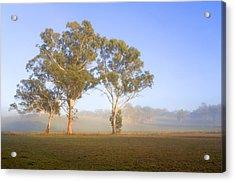 Paddock Sunrise Acrylic Print by Mike  Dawson