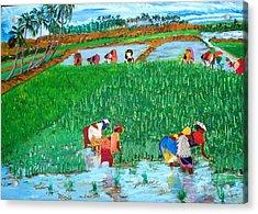 Paddy Planters Acrylic Print by Narayan Iyer