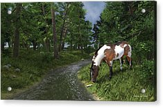 Paint Horse By The Forest Stream Acrylic Print