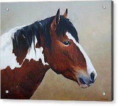 Paint Stallion Acrylic Print