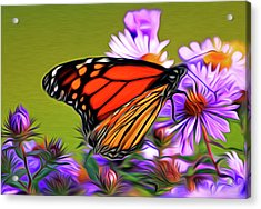 Painted Butterfly Acrylic Print by David Kehrli