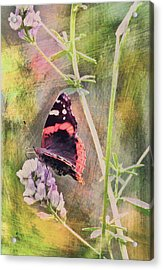 Painted Butterfly Acrylic Print by James Steele