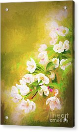 Painted Crabapple Blossoms In The Golden Evening Light Acrylic Print