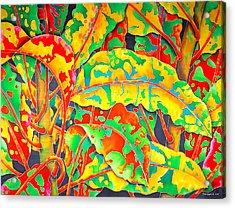 painted Crotons Acrylic Print by Daniel Jean-Baptiste