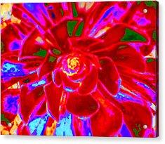 Carnival Colors Acrylic Print