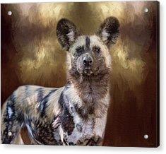Painted Dog Portrait II Acrylic Print