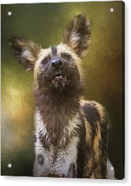 Painted Dog Portrait Acrylic Print