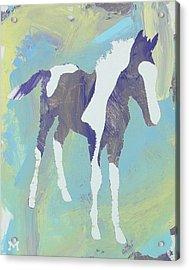 Painted Foal Acrylic Print