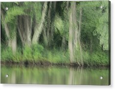 Painted Forest  Acrylic Print by Karol Livote