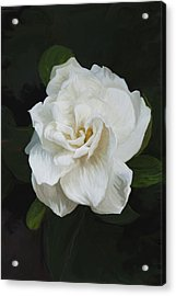 Acrylic Print featuring the photograph Painted Gardenia by Phyllis Denton