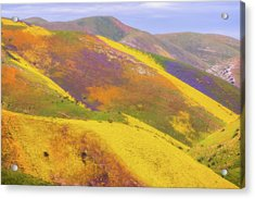 Acrylic Print featuring the photograph Painted Hills by Marc Crumpler