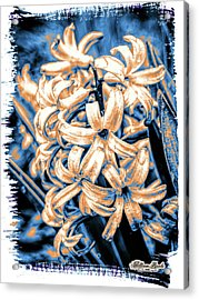 Acrylic Print featuring the digital art Painted Hyacinth by William Havle