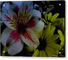 Painted Lily Acrylic Print by Greg Patzer
