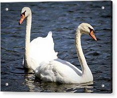 Painted Mute Swans Of Lake Junaluska North Carolina II Acrylic Print