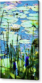 Acrylic Print featuring the mixed media Painted North American White Water Lily by Onyonet  Photo Studios
