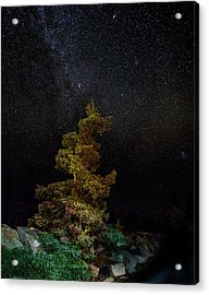 Painted Pine Acrylic Print by Brent L Ander