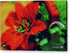 Acrylic Print featuring the photograph Painted Poinsettia by Sandy Moulder