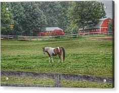 1005 - Painted Pony In Pasture Acrylic Print