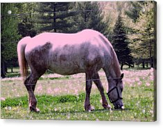 Acrylic Print featuring the photograph Painted Pony by Susan Carella