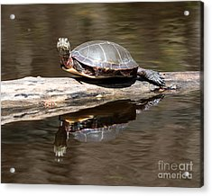 Painted Reflection Acrylic Print