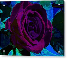 Painted Rose Acrylic Print