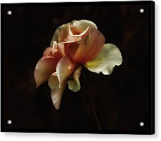 Painted Roses Acrylic Print