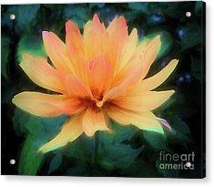 Painted Tangerine Dahlia Acrylic Print