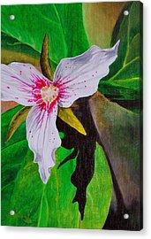 Painted Trillium Acrylic Print