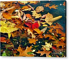 Painted Water          Autumn            Indiana Acrylic Print