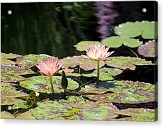 Painted Waters - Lilypond Acrylic Print